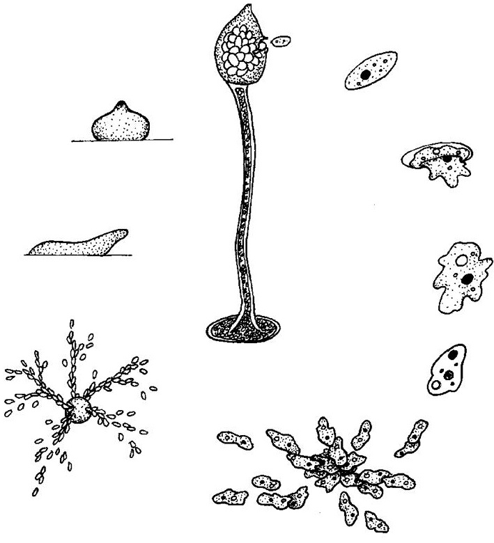 Related Keywords & Suggestions for evolution biology