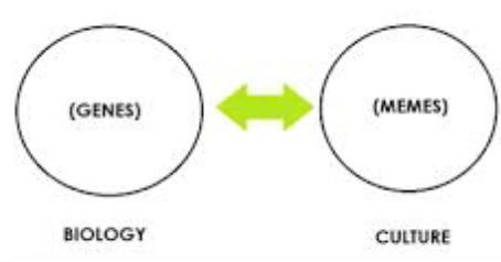 True Sciences Predict & Control the Cycles of its Species