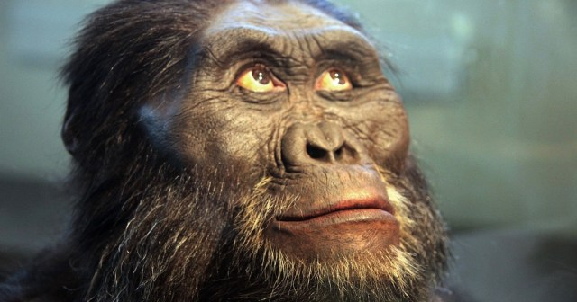 are humans apes
