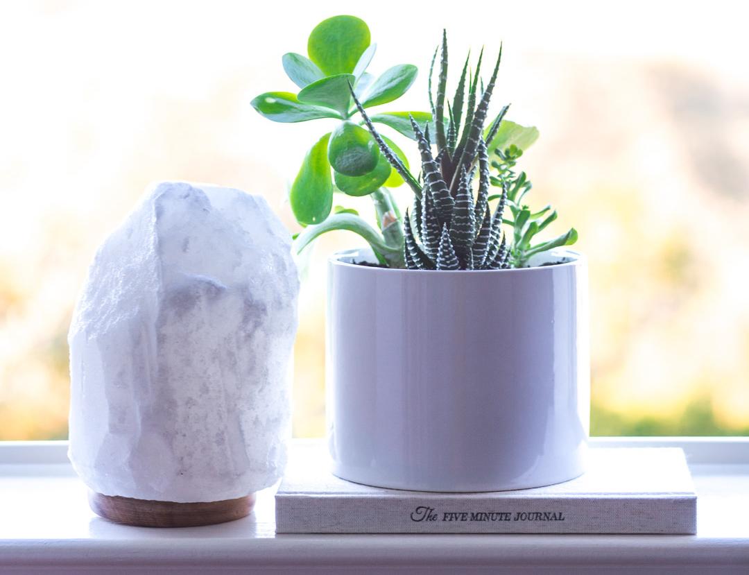 White Salt Lamp Plant