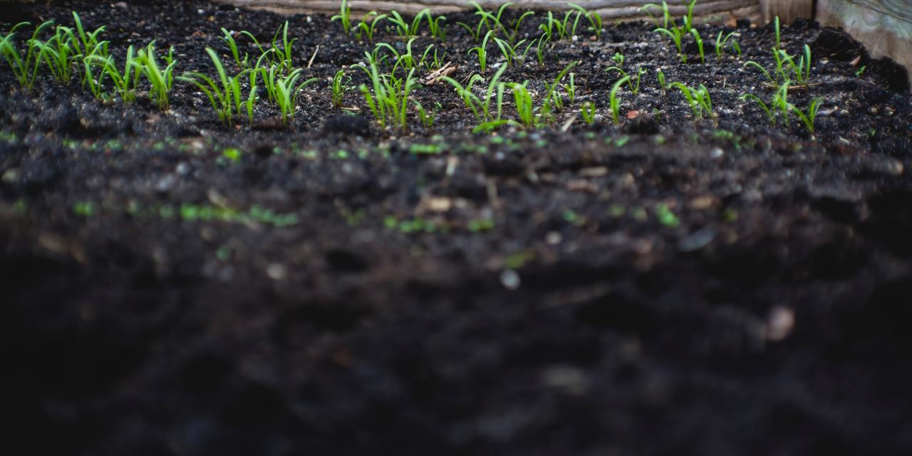 Human Composting: A Reconstructionist Rabbi's View