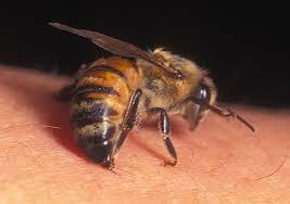 Bee Stinging 2 - Bee Stinging