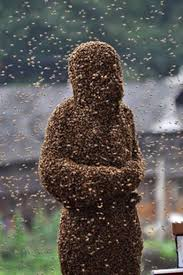 Swarm of Bees 1 - Swarm of Bees