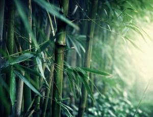 photodune 2488529 bamboo l SMALLER - Bamboo