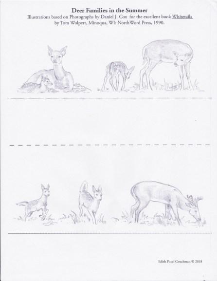 Deer Family Illustration