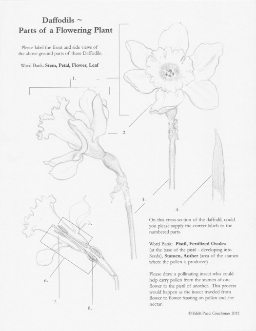 Daffodil Parts EB 2018