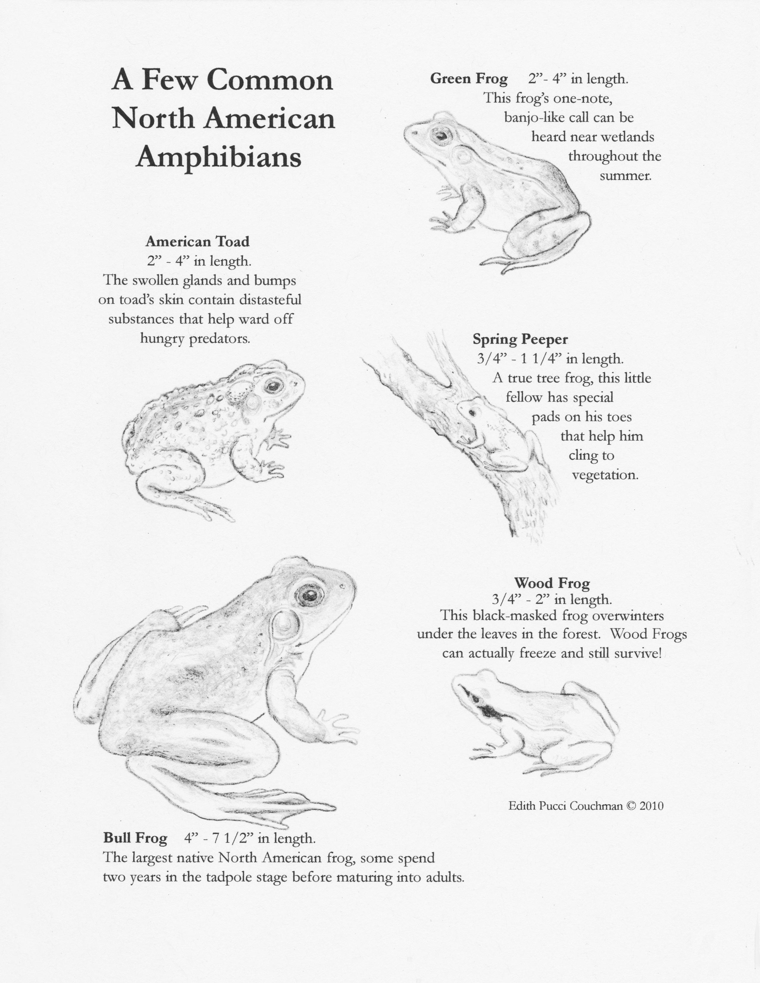 A Few Amphibians of Note