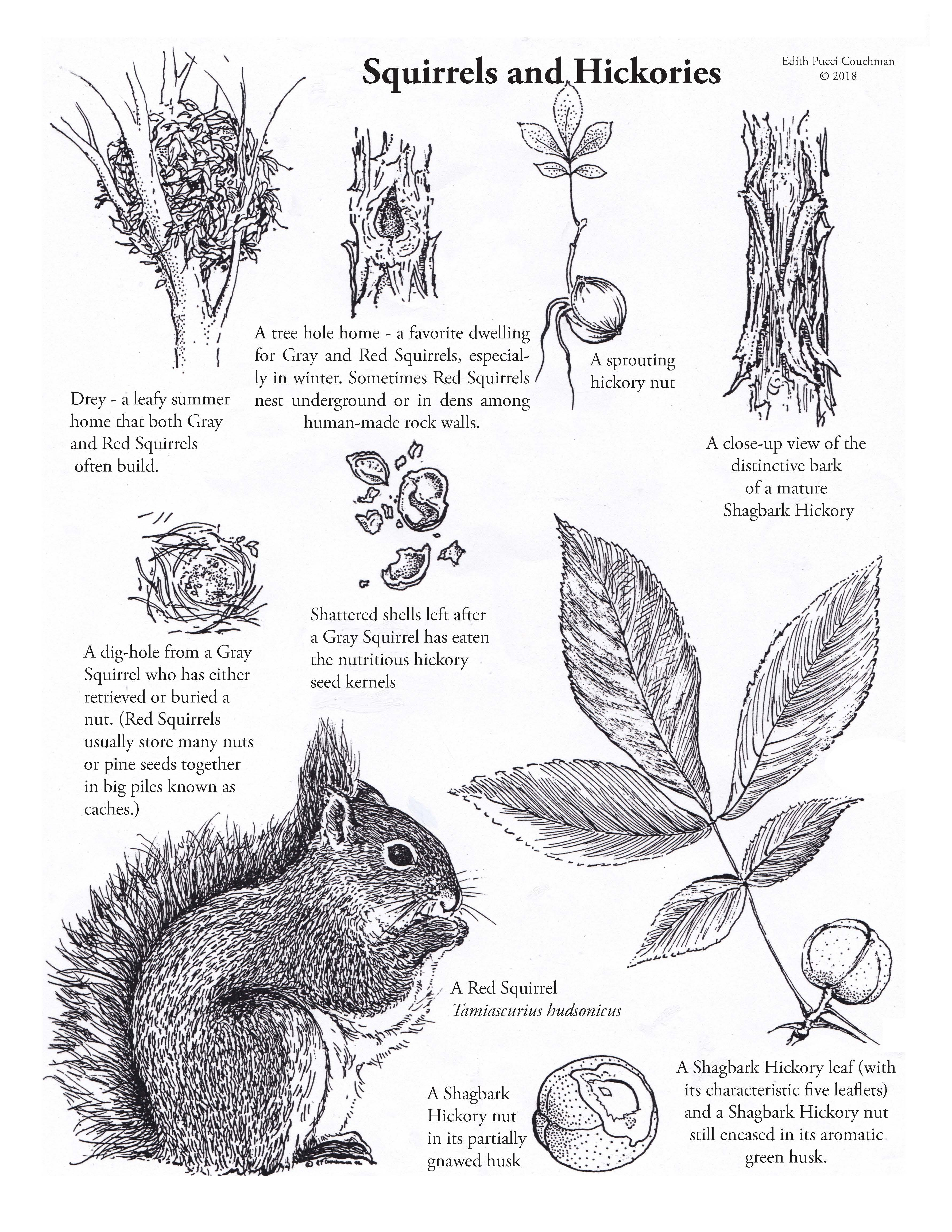 How To Draw A Squirrel In A Tree Hole