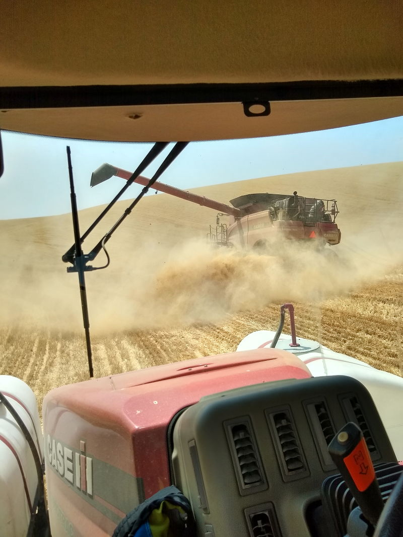 The bank out wagon pulling under the auger of the combine during my seasonal job while traveling the country full time in an RV.