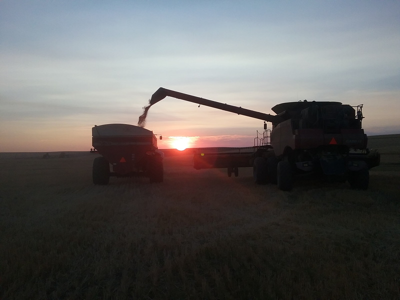 The combine dumping into the bank out wagon as the sn sets over the hills during my seasonal job while we travel the country full time in our RV.