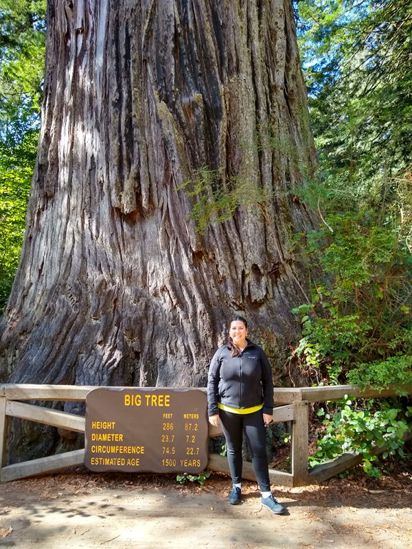 The Big Tree in Redwoods National Forest.
