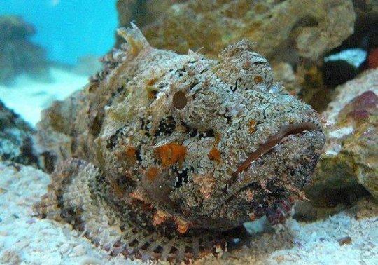 Beware of Stonefish