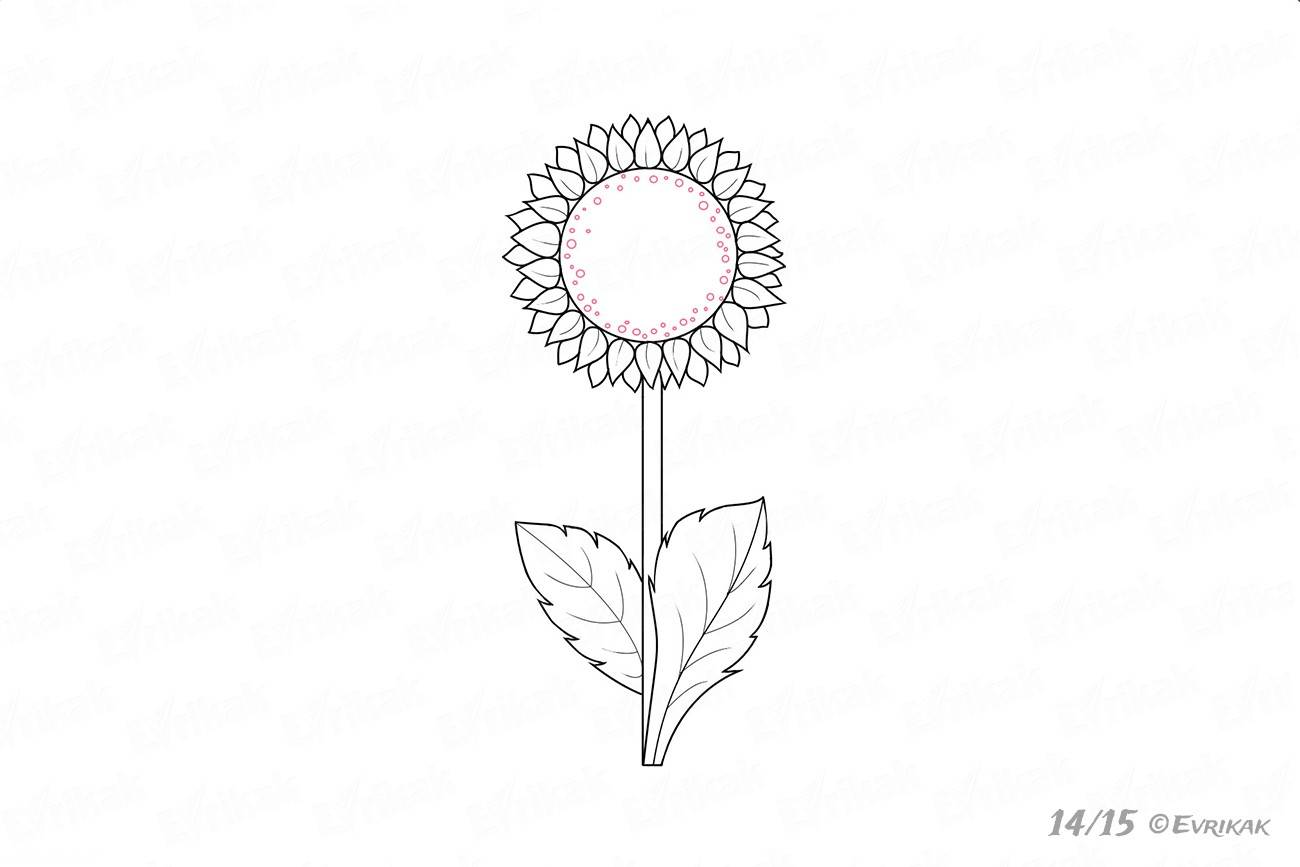 How to draw and color a sunflower in stages