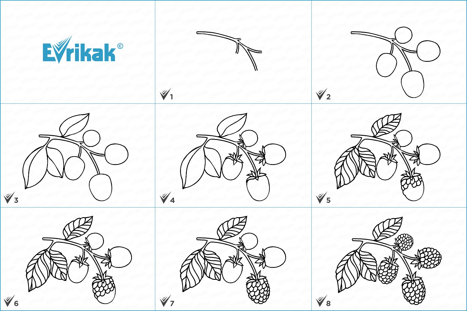 How to draw a blackberry step by step using a pencil
