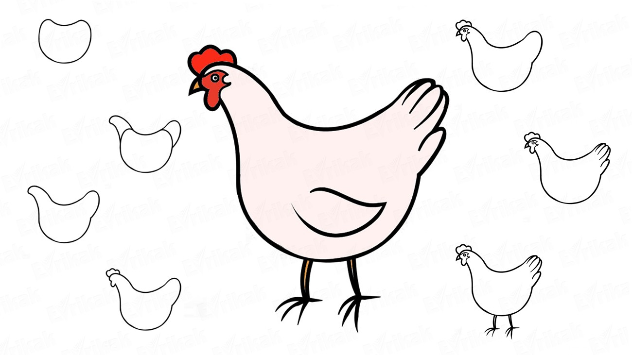 How to draw a hen in stages using a pencil
