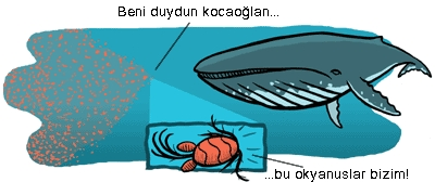 Copepod whale.jpg