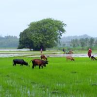 A photo blog - Coastal Karnataka during Monsoon