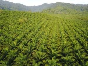 Palmöl - Wort des Tages - EVS Translations