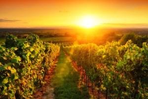 Pastoral – idyllisch, ländlich, seelsorgerisch– Wort des Tages - EVS Translations