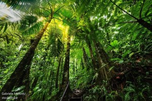 Амазонска тропическа гора / Amazon Rainforest – Дума на деня– EVS Translations