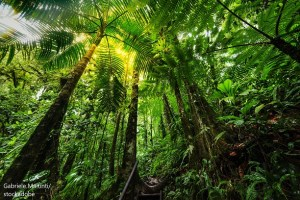 Amazon Rainforest – Word of the day – EVS Translations