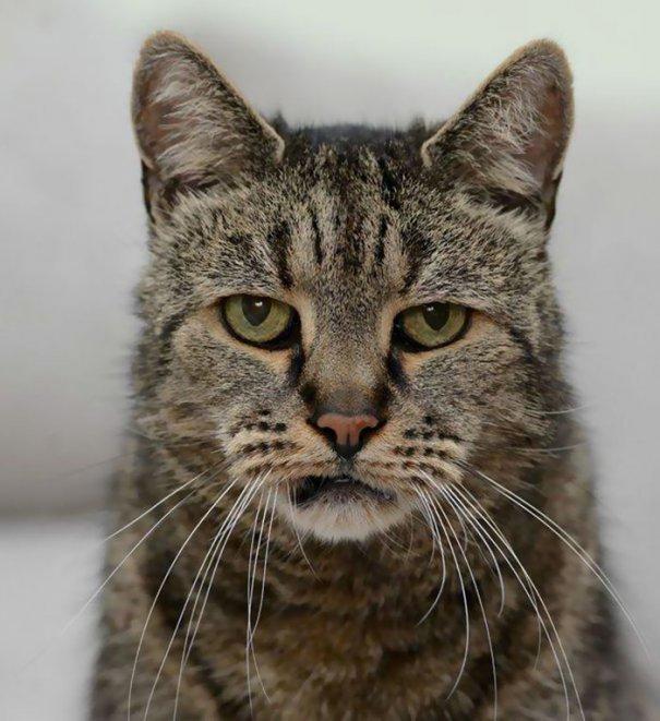 Cea mai bătrână pisică din lume își celebrează ziua de naștere ASTĂZI!  Vârsta ei e un ȘOC pentru toți veterinarii! FOTO - Evenimentul Zilei