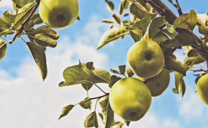 Jabłkowy mus – krem do twarzy