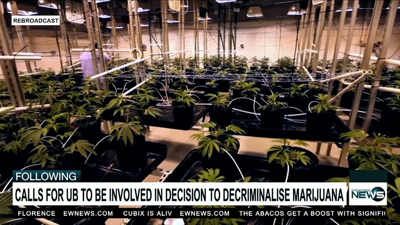 Weed advocate lobbies for UB participation in legalisation research
