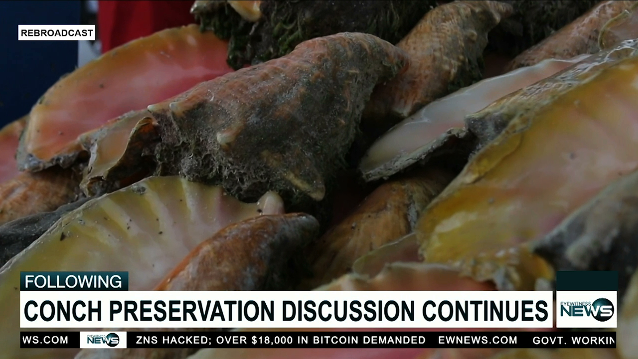 Fisheries officials discuss depleted conch supply with vendor reps