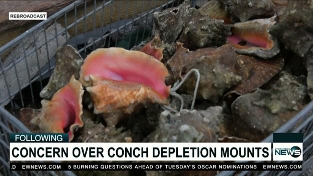 Arawak Cay vendors reject closed season on conch