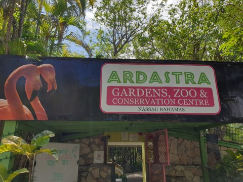 Ardastra adds another feather to its cap with top TripAdvisor Award