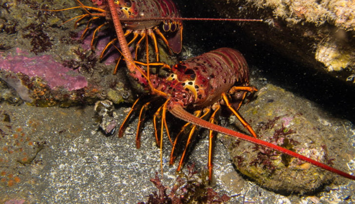 Crawfish season opens