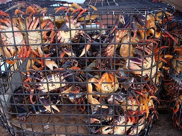 Crab vendors will be given designated area in New Providence