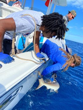 BAMSI students get hands-on with shark expedition