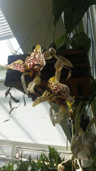 Spectacular orchids