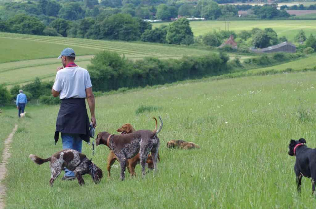 wonderful dog walks in safe secluded fields with eWoof dog walking