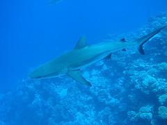 Tahiti - Manihi diving La Faille