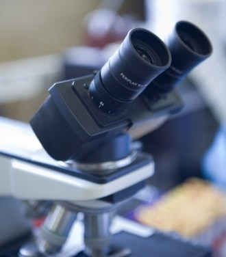 Becas de investigación: Convocatoria 2013