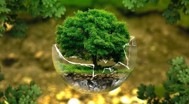 VIII Jornadas Regionales 6ª Jornadas Nacionales de Ecología Urbana