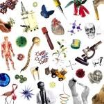 Biología: Selección de antecedentes para cubrir cargos transitorios