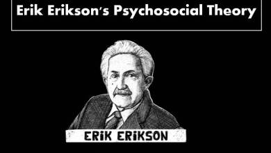 Photo of Erikson Theory of Psychosocial Development In Hindi For CTET, UPTET,KVS