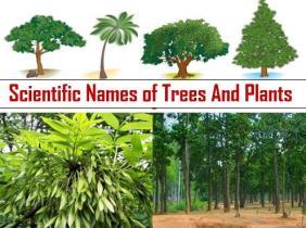 Scientific Names of Trees