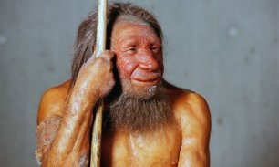 Courtesy of: https://www.theguardian.com/science/blog/2011/nov/16/dear-professor-husband-neanderthal