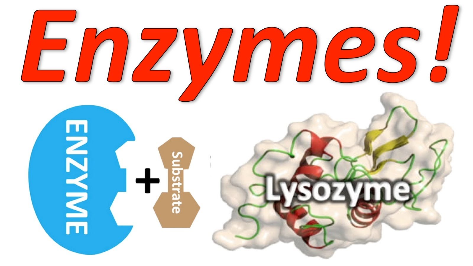 Optimum Conditions For Enzymes Biology Study Material