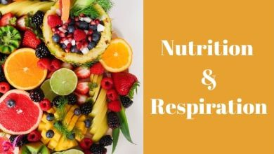Photo of Nutrition & Respiration