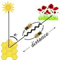 Πόσο μακριά πετούν οι μέλλισσες για να συλλέξουν τροφή;