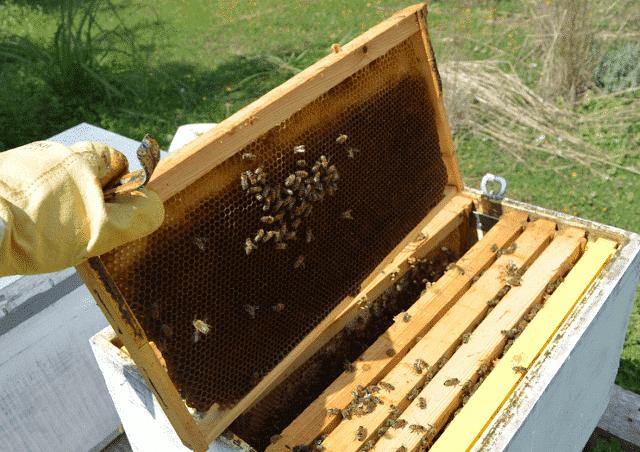 Εάν ορφανεψει δυνατό 15άρι μελισσι τι ενέργειες κάνουμε;