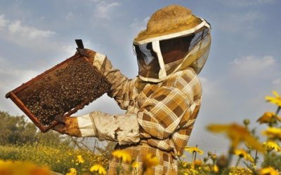 Νέοι μελισσοκόμοι. Συμβουλές για το ξεκίνημα σας.