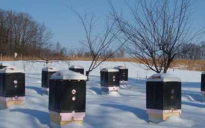 Νοέμβριος – Δεκέμβριος, ποιες μελισσουργικές εργασίες πρέπει να κάνουμε;