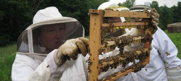 Συμβουλές περιποίησης και φροντίδας των μελισσιών σας.